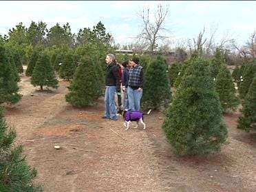 Family Finds Perfect Tree At Owasso Farm