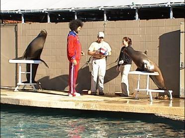 Sea Lions Take On A Globetrotter