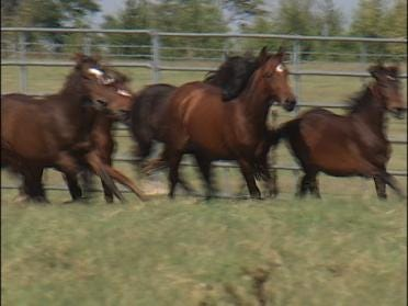 Survey To Address Horse Crisis