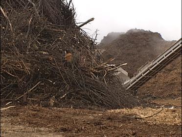 Mulch Piles Causing Problems