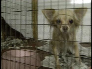 Puppy Mill Bill Turned Down By Committee