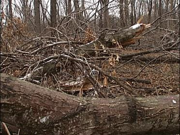 Damaged Park Trees Getting A Review