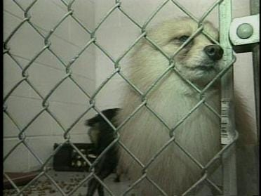 Puppy Mill Law One Step Closer