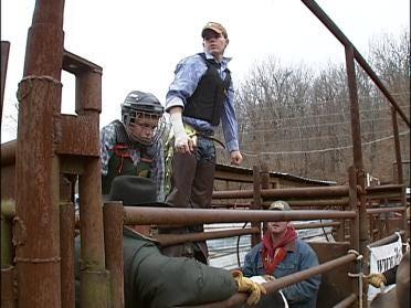 Love Of Rodeo Despite The Danger