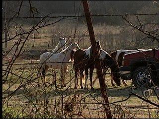 Dozens Of Horses Starved