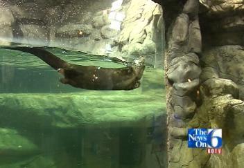 Mammals Make Their Way To Aquarium