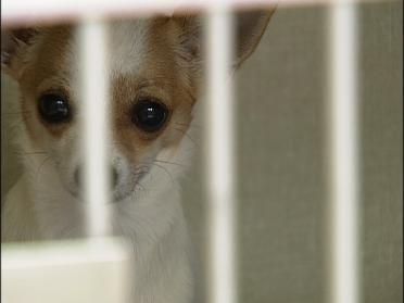 Beware Of Fake Pet Meds
