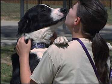 Pets Can Infect Their Owners With 'Superbug'