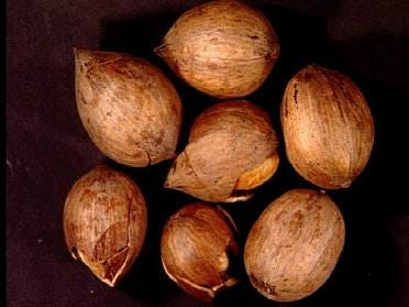 Assistance Sought For Pecan Farmers