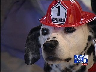 Sparkles The Safety Dog Visits School