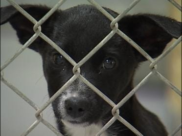 Animal Shelter Busy On Normal Off Day
