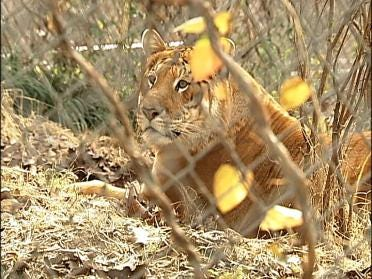 Safari's Reopens After Deadly Liger Attack