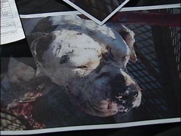 Home Condemned In Animal Cruelty Case