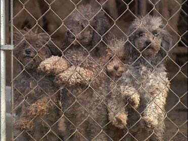 Two Arrested In Connection With Puppy Mill