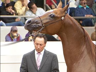 Horse Owners Seeking Bragging Rights