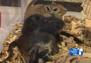 Furry Friends Invade Green Country