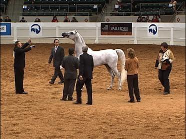 Horse Show Happy With Tulsa