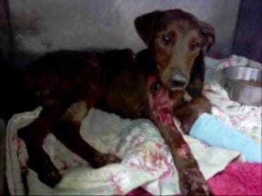 Investigation Continues Into Dog Dragging