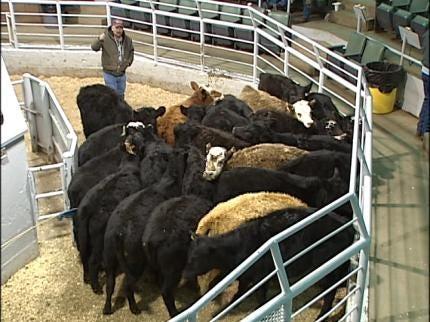 Oklahoma Cattlemen Oppose Cow Flatulence Fee