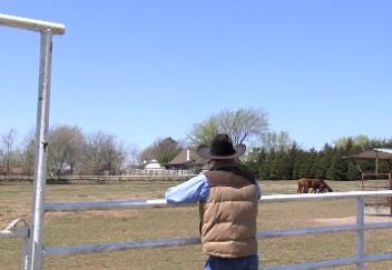 Local Vet Opposes Amendment Allowing Unlicensed Horse-Teeth Floating