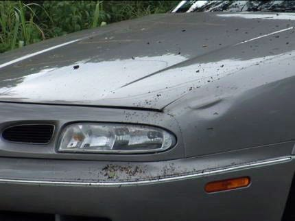 Tree Damages Car In Sand Springs