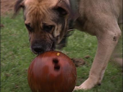 Help Needed For Bongo The Dog