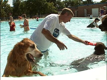 Dozens Of Dogs Swim In Tulsa Pools