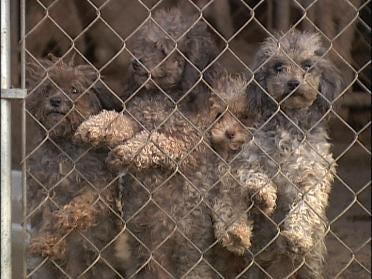 Committee OKs Puppy Mill Bill