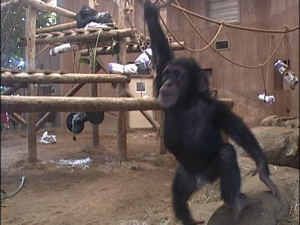 Vendi Turns 2 At Tulsa Zoo