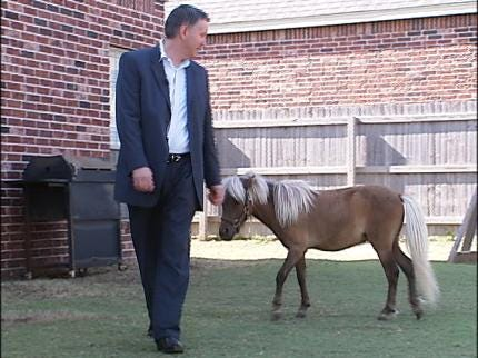 Court Considers If Miniature Horse Is A Pet