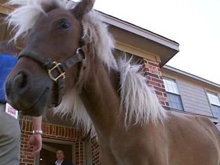 Broken Arrow Man Can Keep Miniature Horse
