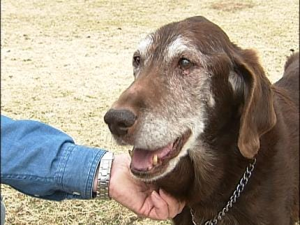 New Dog Park To Open In South Tulsa