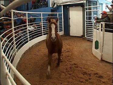 Controversial Bill Aimed At Saving Horses