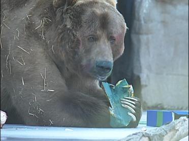 Tulsa Zoo Celebrates Brown Bear's Birthday