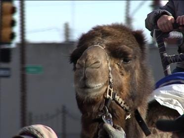 Camels Attend Trinity Episcopal Church Service