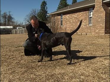 Dog Stabbed In Pittsburg County