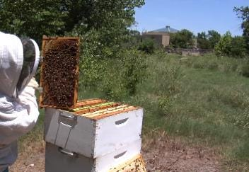 Oklahoma Beekeepers Fearful of Colony Collapse Disorder