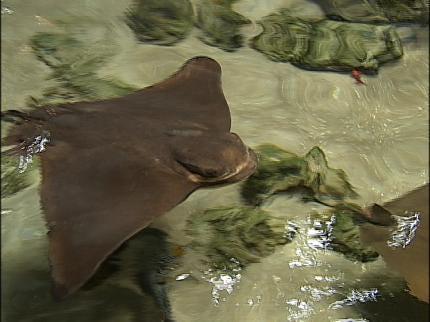 Oklahoma Aquarium Receives National Honor