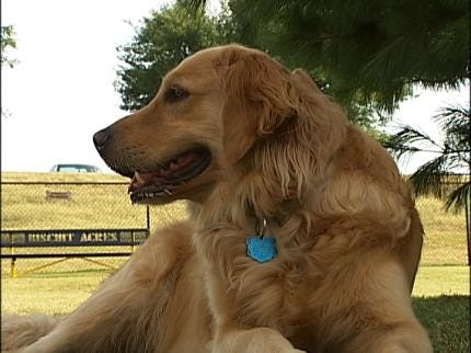 Biscuit Acres Reminder: The Park Is For The Dogs
