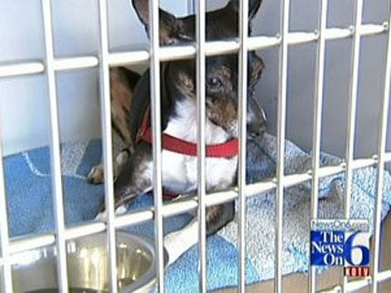 Tulsa Pets Looking For New Homes
