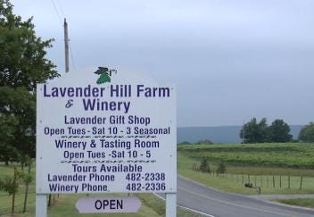 Stone Bluff Lavender Festival this Saturday