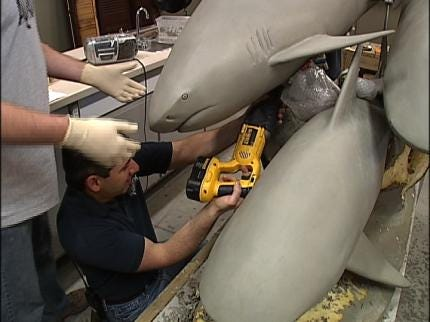 Aquarium's Shark Sculpture Nearly Ready