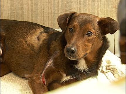 Hearing In Creek County Animal Cruelty Case