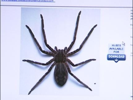 Deadly Spider Found At Tulsa Store