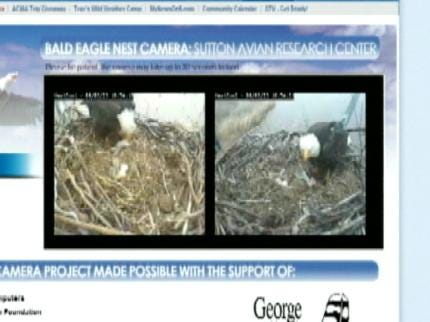 Baby Eagle Hatches In Oklahoma