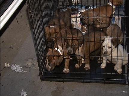 Tulsa Dogs Being Adopted In Denver
