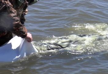 Owasso Lake Gets Stocked With 100,000 Fish