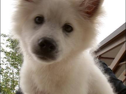 Tulsans Rescue Abused, Abandoned Dog
