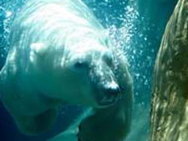 Tulsa Zoo's Polar Bear Dies