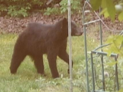Bear Sightings East Of Tulsa